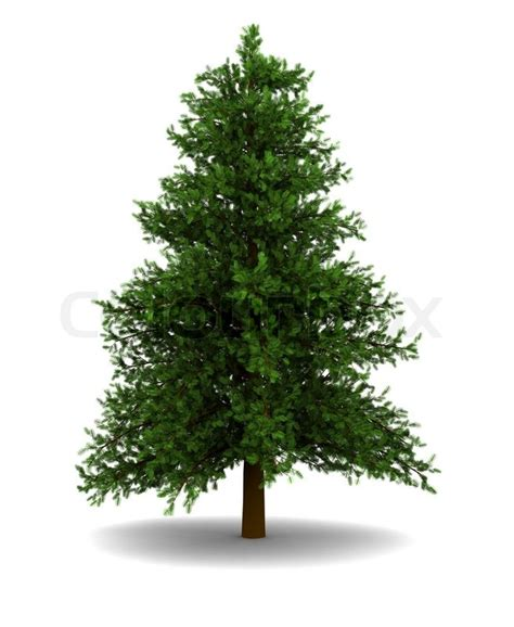 3d illustration of single christmas tree over white