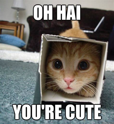 Meme Cute - kitten memes image memes at relatably com