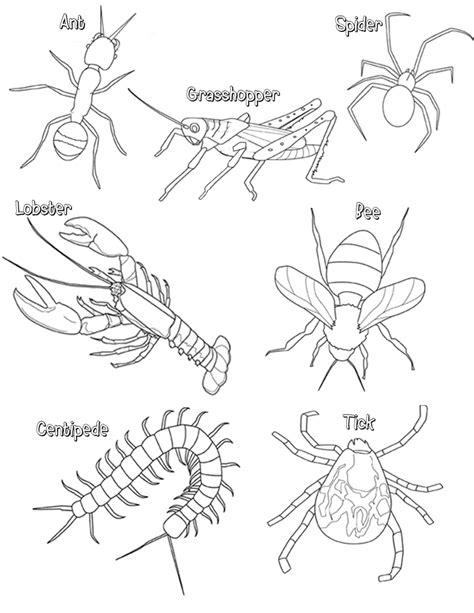 Arthropod Coloring Page | arthropods thinglink