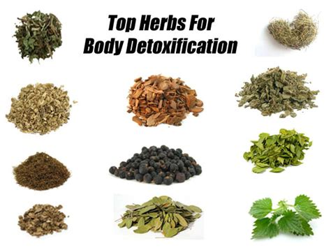 Herbs To Detox by Blood Detoxification How To Cleanse Your Blood Naturally