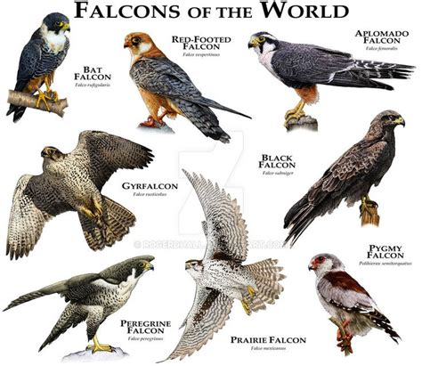 flight of the hawk the river a novel of the american west books 1000 ideas about falcons on kestrel american