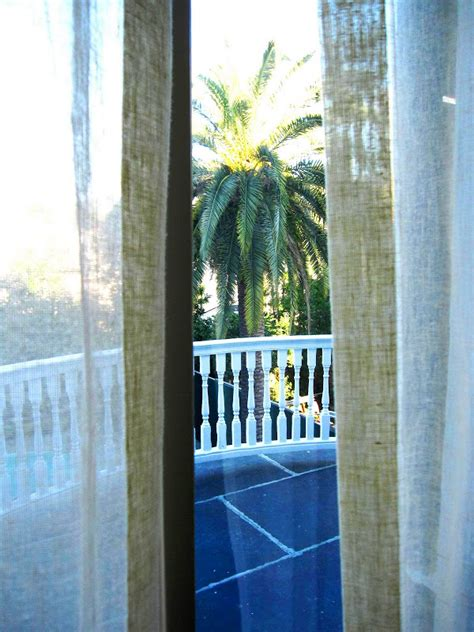 palm tree sheer curtains gonul s blog view outside my second floor window at the