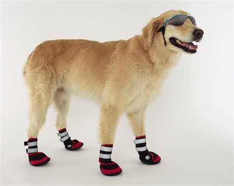 dog boat socks nike doggie boots dog boots that stay on the river city news