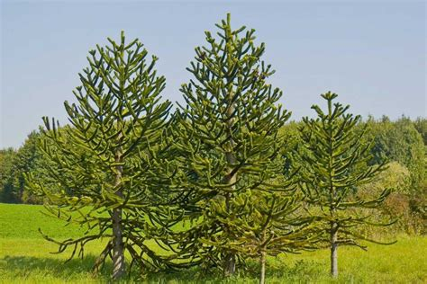 unique trees 28 images unique trees outdoor luxury