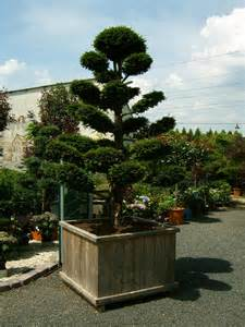 garten bonsai kaufen gartenbonsai vom fachbetrieb bonsai in