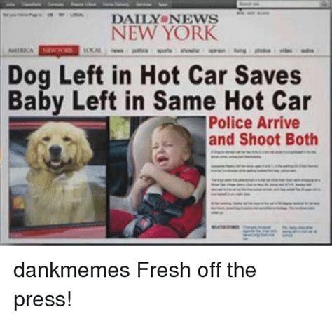 New Memes Daily - daily news new york dog left in hot car saves baby left in