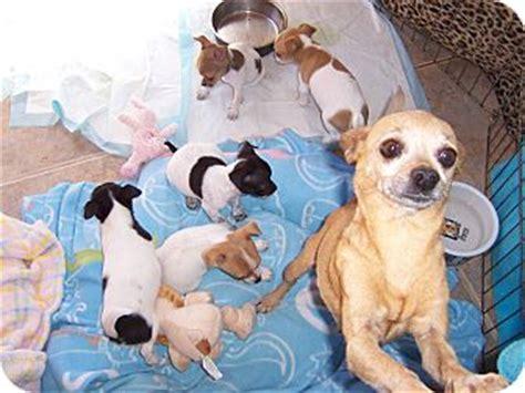 tucson puppies puppy adoption tucson breeds picture