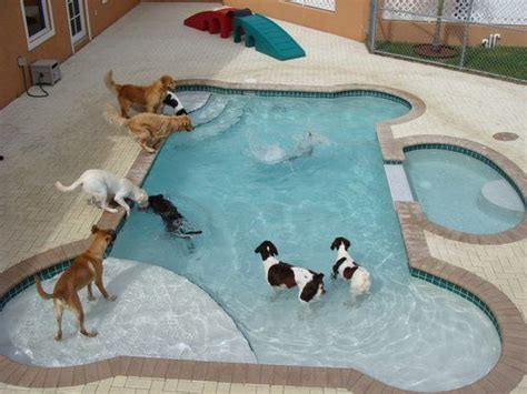 home grand pet hotelgrand pet hotel 15 best images about amazing resorts swimming pool on