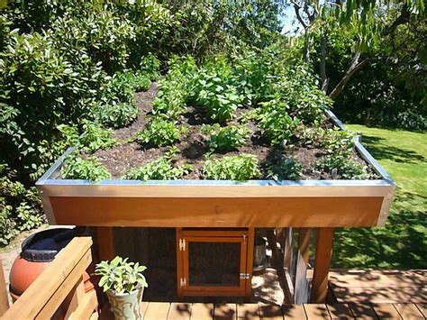 free green roof chicken coop plans the poultry guide