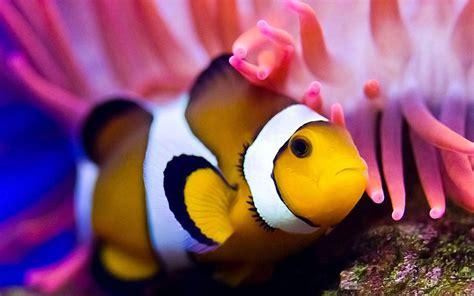 se filmer amélie gratis peixe palha 231 o fundo hd apk baixar gr 225 tis personaliza 231 227 o