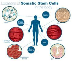 stem cell treatment now stem cell treatment now some alternative 1000 images about science on pinterest stem cells