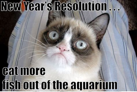 grumpy cat new year pin by cats on happy new year cats