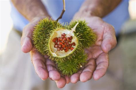 achiote or annatto what is it and how to use it