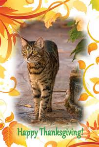 happy thanksgiving cats happy thanksgiving from all of us at zee amp zoey s zee