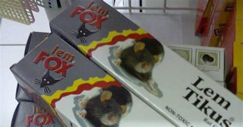 Lem Fox Tikus Supplier Obat Hama Lingkungan Lem Tikus Fox