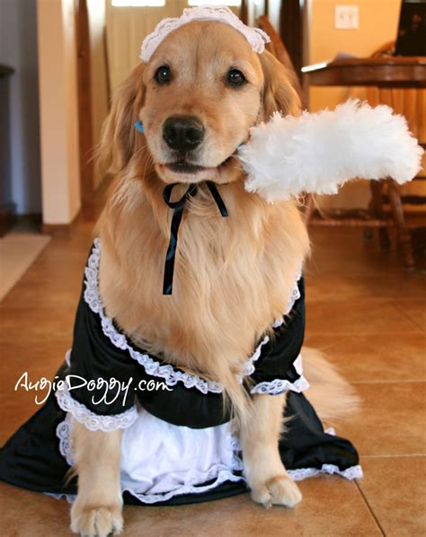 golden retriever costume 10 best images about golden retrievers in costume on apps and hippies