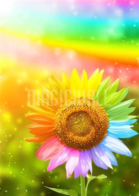 rainbow sunflower wall murals wall decals posters