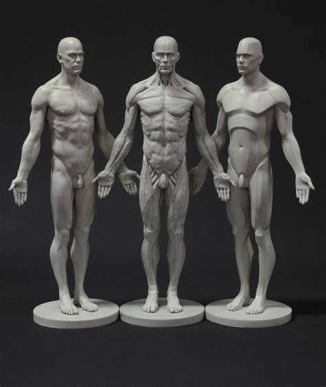 male ecorche human anatomy reference 3d model 3d human male body drawing