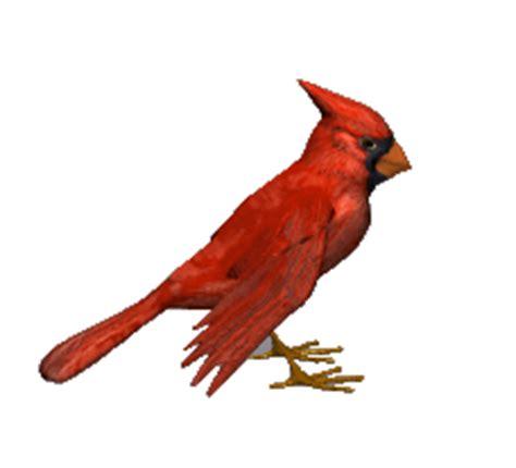 jbc s birds non animated