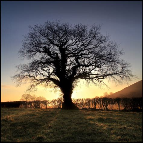 50 beautiful exles of tree photography noupe
