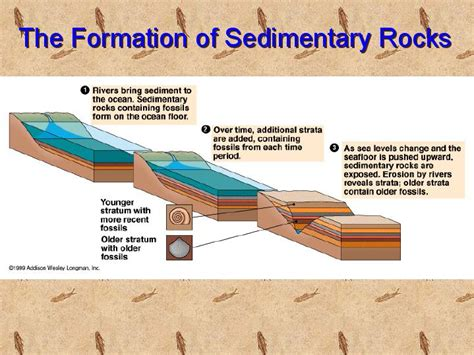 diagram of how sedimentary rocks are formed how sedimentary rocks are formed diagram www pixshark