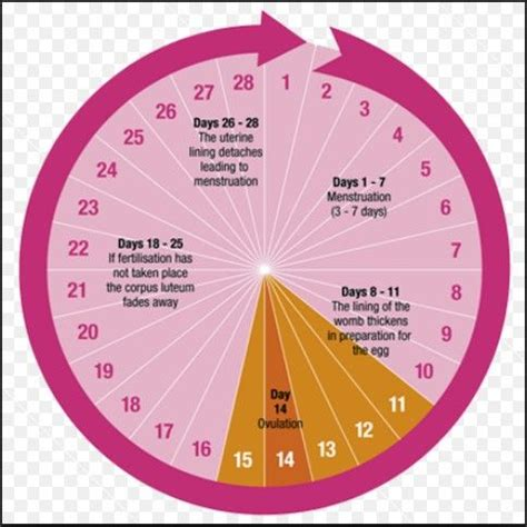 Menstrual Cycle After Cesarean Section by 17 Best Ideas About Menstrual Cycle On Period