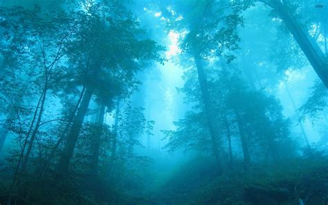 wallpaper blue forest blue light in the foggy forest wallpaper