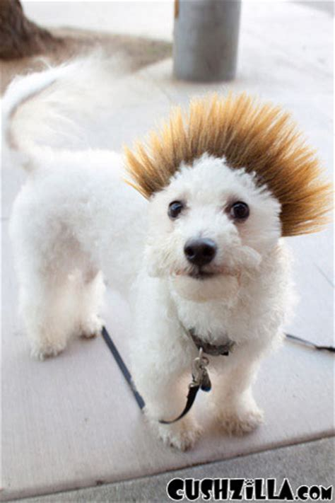 black spikey fur dog dog wig cat wig cushzilla ombre spiked bro wig for dogs