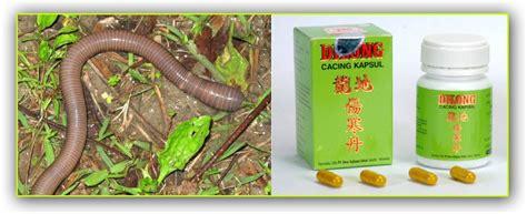 Obat Cacing Cina animazing wildlife cacing kalung pheretima aspergillum