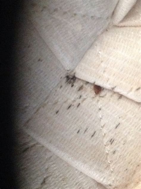 how are bed bugs transferred bed bugs in atlanta georgia where are they georgia