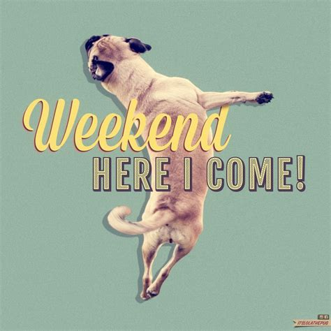 lola s excitement for the weekend quot pugs quot quot boxers pint