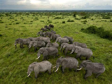 queen elizabeth national park uganda queen elizabeth national park elephants uganda travel 365 national geographic