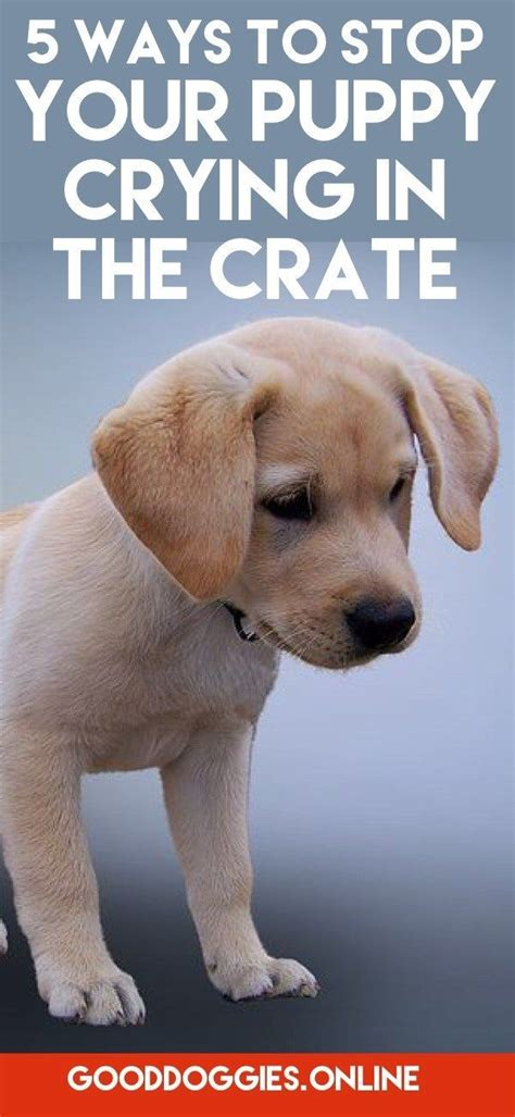 puppy cries in crate at 240 best pet images on obedience pets and