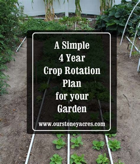 1000 Images About Gardening Ideas On Pinterest Garden Crop Rotation Home Vegetable Garden