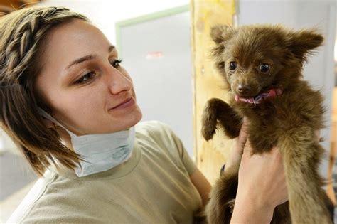 essentials petcare expands vet clinics pet age