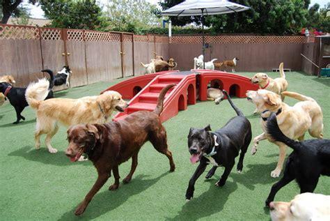 dog play area backyard bone backyard dog daycare dog boarding orange county