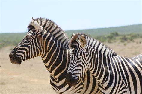 Safitri Syari como fazer um safari na 193 frica tudo que voc 234 precisa saber
