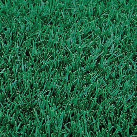 Blue Grass Seed 5lbs midnight kentucky bluegrass seed ebay