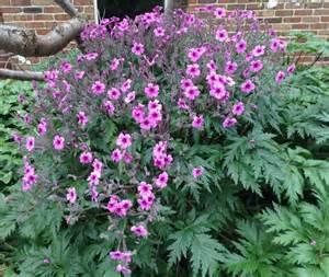 Garden Flower Plants Shrubs Gardenworld 187 Gardenworld