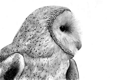 Barn Owl By Skoppio On Deviantart Barn Owl Drawing