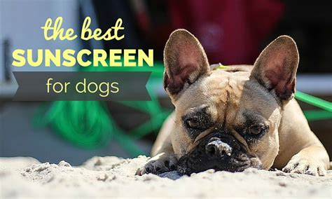 sunblock for dogs best sunscreen for dogs stay safe in the