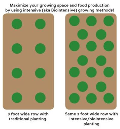 Garden Spacing - 1000 images about grow biointensive gardens on