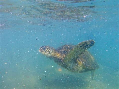 Gopro Underwater equipment recommendation scuba underwater photography