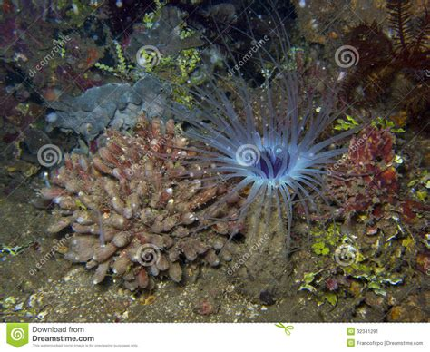 Shower Cap Ceria pink sponge stock image cartoondealer 85965319