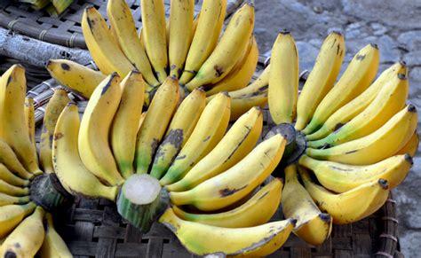 1 Sisir Pisang Ambon pisang raja berkah khair