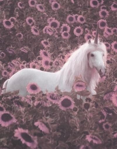 imagenes de unicornios hipster grunge unicorn tumblr