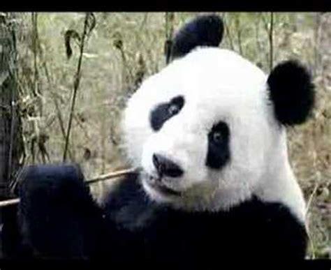 imagenes de animales en extincion animales en peligro de extinci 243 n youtube