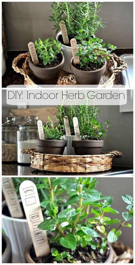 indoor herb garden 17 best ideas about indoor window garden on pinterest