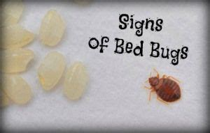 How To Sleep With Bed Bugs by Are You Sleeping Alone 4 Signs Of Bed Bugs Gt Here S How