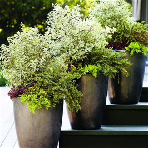 Summer Planter Ideas by Summer Planter Ideas Bloomingdesign